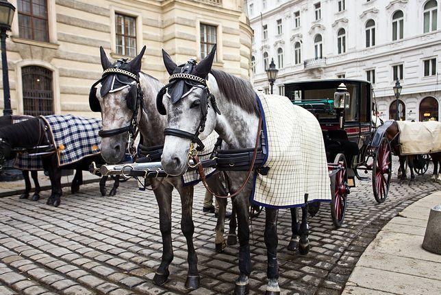 Od konia i karety do sterowca - jak dawniej podróżowano