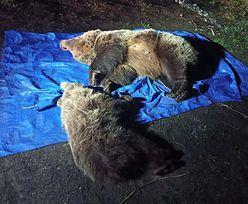 Strzały w Tatrach. Nie żyją niedźwiedzie