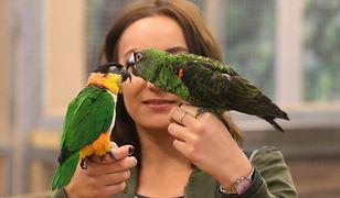 Efekt globalnego ocieplenia w Polsce. Papugi będą zakładać kolonie w parkach, a nie w papugarniach