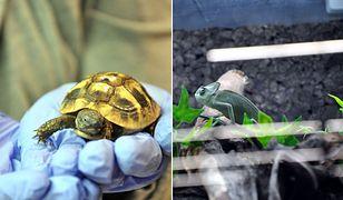 W sklepie zoologicznym sprzedawano zwierzęta zagrożone wyginięciem!