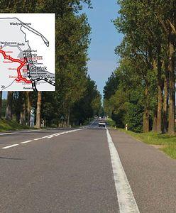 Rzeź drzew na Pomorzu. 13 kilometrów remontu drogi i 5 tys. do wycinki