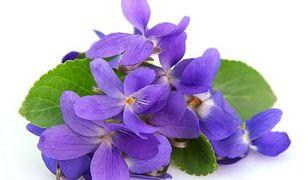 Fiołek - pięknie pachnie i leczy
