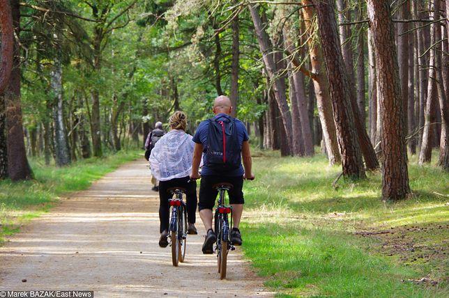 Zdjęcie ilustracyjne. Szlak rowerowy w lesie