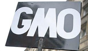 Polska i 11 krajów zaapelowało o niedopuszczenie do uprawy kukurydzy GMO