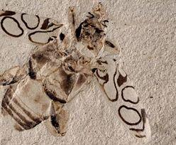 Naukowcy oniemieli. Odkrycie sprzed blisko 50 milionów lat