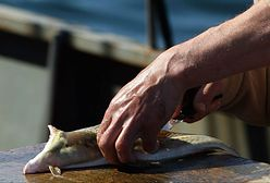 Bałtyckim smażalniom grozi katastrofa. Dla jednego dorsza trzeba płynąć ponad 18 mil