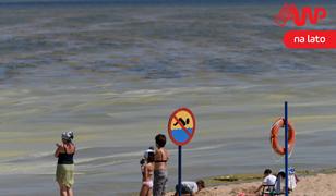 Piękne plaże - to na spocie. Plaże z sinicami - to już rzeczywistość nad Bałtykiem