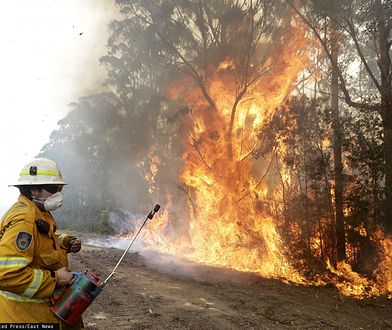 """Australia świętuje. Udało się opanować """"wielki pożar"""". Dobre wieści od synoptyków"""