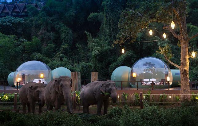 Goście hotelu mają możliwość spędzenia nocy w bliskim towarzystwie słoni