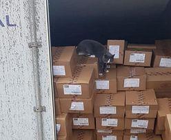 Przeżył 19 dni w zamkniętym kontenerze. Kot miał ogromne szczęście