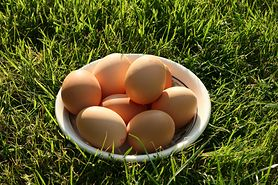 Alergia na jaja