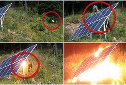Podpalił panel solarny w turystycznej miejscowości. Właściciele szukają sprawcy