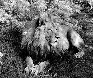 Chorzów. Śląskie zoo w żałobie. Nie żyje ikona ogrodu