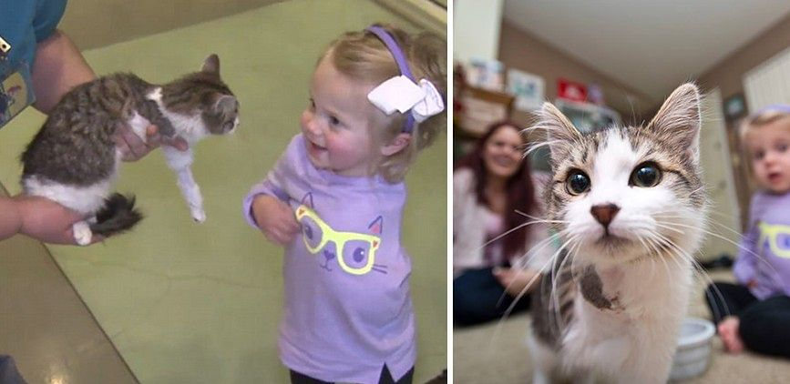 Scarlette i jej kotek