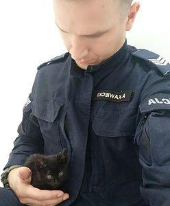 Warszawa. Coś pozytywnego. Policjanci uratowali i znaleźli dom dla małego kotka