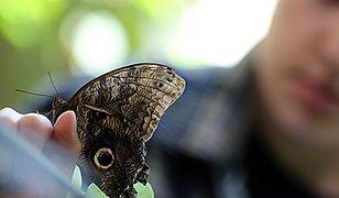 Motyle w warszawskim ZOO