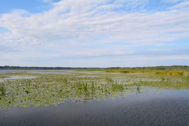 Jezioro Druzno leży niedaleko Elbląga