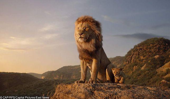 """""""Król lew"""": Pierwsze reakcje po prapremierze filmu"""