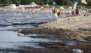 Sinice w Bałtyku. Sanepid zamyka nadmorskie kąpieliska