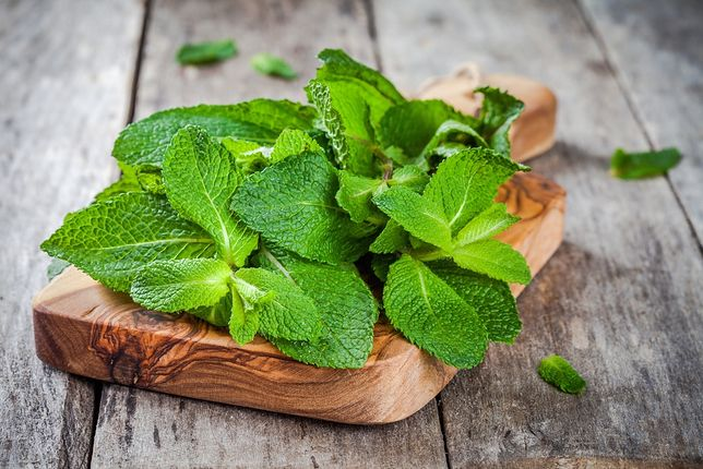 Mięta - zastosowanie i właściwości zioła