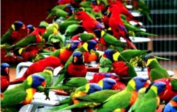 Feria barw i trzepot skrzydeł