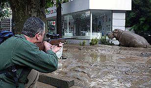 Niebezpieczne zwierzęta grasują po ulicach Tbilisi