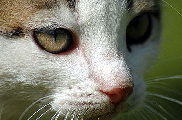 Firma skupuje psy i koty na kilogramy. Na rzeź?