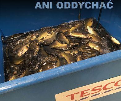Ryby nie mogły przyjąć naturalnej postawy ani oddychać.