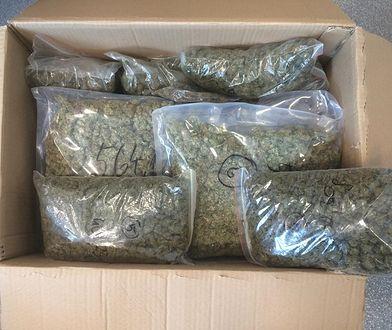 Gdańsk: Mężczyzna miał 80 kilogramów marihuany. Został oskarżony o przemyt