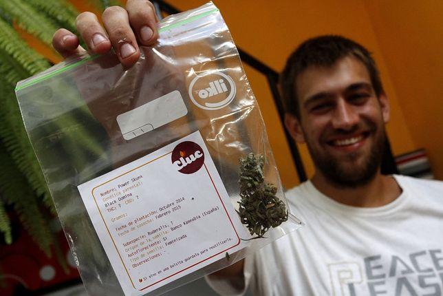 Marihuanowe dożynki – pierwsze legalne żniwa w Urugwaju