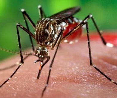 Musimy nauczyć się z nimi żyć. Śmiertelnie groźne komary blisko Polski