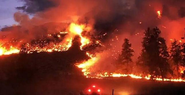 Pożary lasów na Syberii czy w Kalifornii są spowodowane w dużej mierze podnoszeniem się temperatury i wysuszeniem ściółki