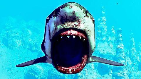 Rozchodniaczek: Jest i Hitman, i Apex: Legends, i samoloty, i rekiny