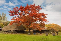 Chorzów. Śląsk to nie tylko węgiel i przemysł, zadbają o jego wiejskie dziedzictwo
