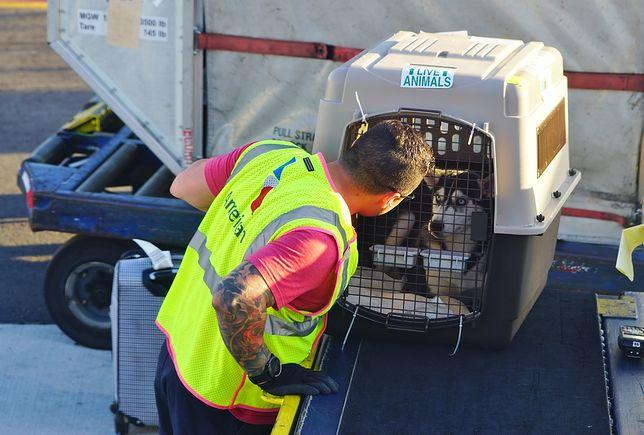 Kolejna wpadka United Airlines. Linia wysłała psa na drugi koniec świata
