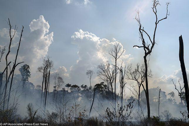 Amazonia. Pożar lasów nadal nie został ugaszony. Głos w tej sprawie również zabrali światowi przywódcy