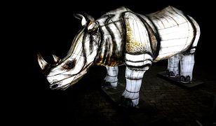 Ekspozycja składa się z kilkunastu podświetlanych figur zwierząt