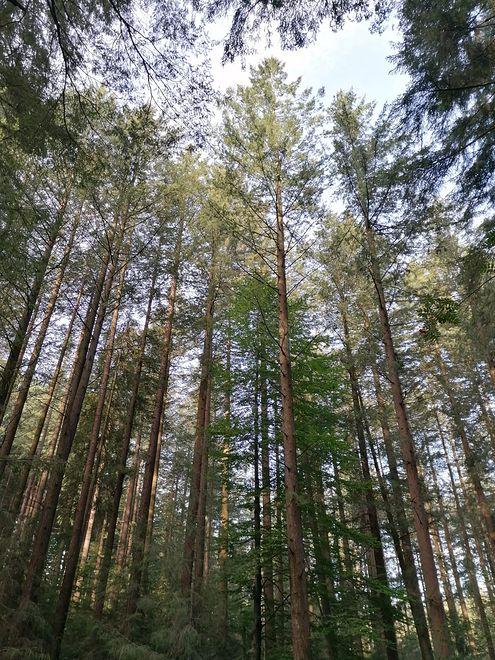 Na Śląsku mamy wiele pięknych zalesionych terenów, chętnie odwiedzanych przez mieszkańców