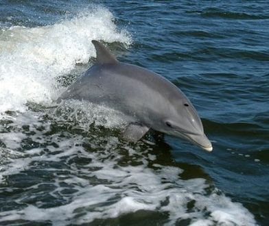 Ciąg dalszy protestów przeciwko mszczonowskiemu delfinarium