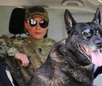 Warszawa. Policyjny pies odchodzi na emeryturę