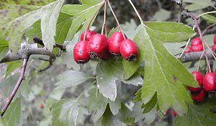 7 zapomnianych owoców jesieni