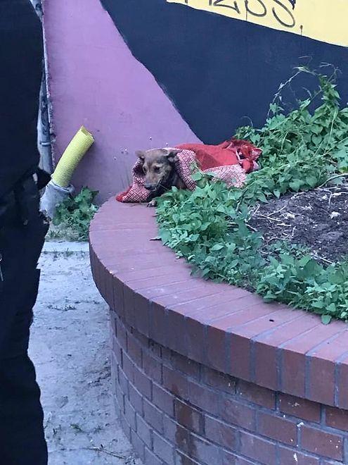 Policja i straż pożarna w akcji