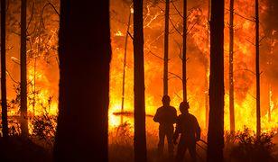Z pożarem walczy ok. 6 tys. strażaków