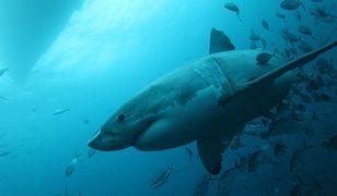 Tajne miejsce rekinów zostało w końcu odkryte