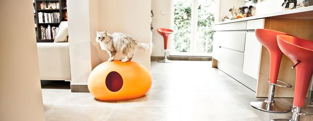 Kryta kuweta zapewnia kotu dyskrecję w czasie załatwiania swoich potrzeb, ponadto ma walory estetyczne