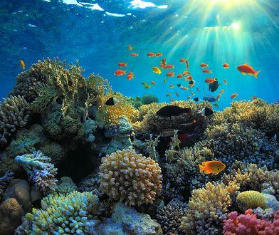 Odkryta rafa ma długość ponad 130 km