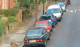 Lisy na londyńskich ulicach to nie jest niezwykły widok