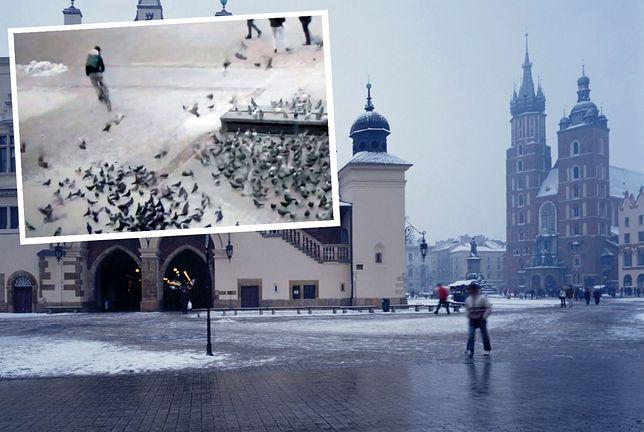 Kraków. Kurier odpowie za rozjechanie gołębi na Rynku Głównym