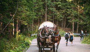 Turyści chętnie korzystają z przejazdów fasiągami nad Morskie Oko