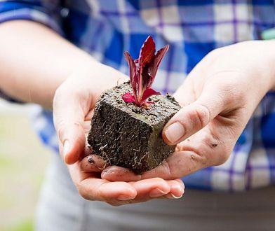 Prace w ogrodzie – co warto zrobić w kwietniu?